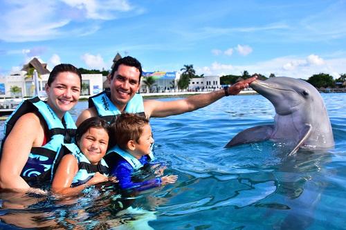 Dolphin Swim Cozumel