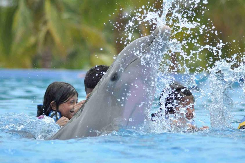 Dolphin Swim Playa del Carmen